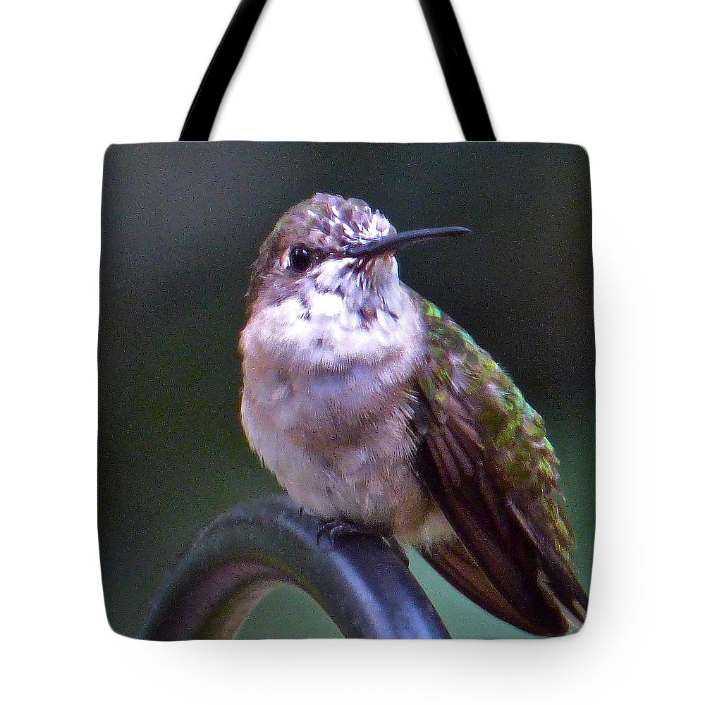 Hummingbird Tote Bag featuring the photograph Just A Yute by Jean Wright