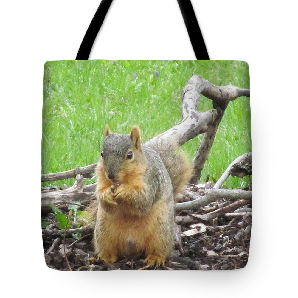 Squirrel Tote Bag featuring the photograph Just Got An Acorn by Tina M Wenger