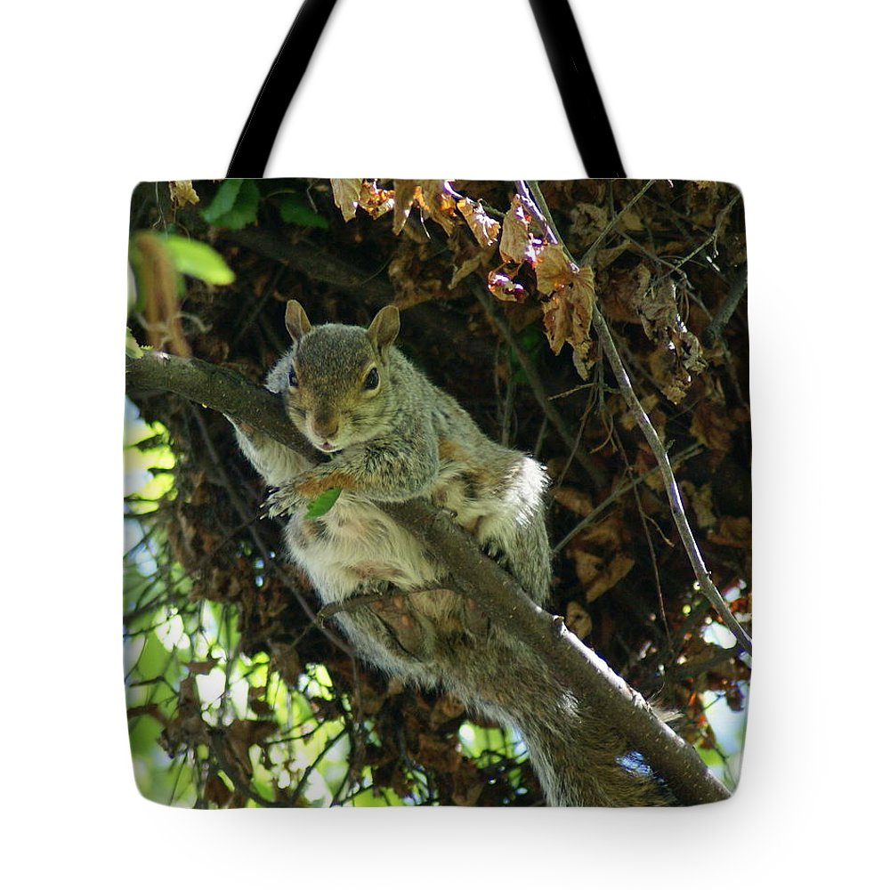 Squirrels Tote Bag featuring the photograph Just Hanging Out Near Home by Ben Upham III