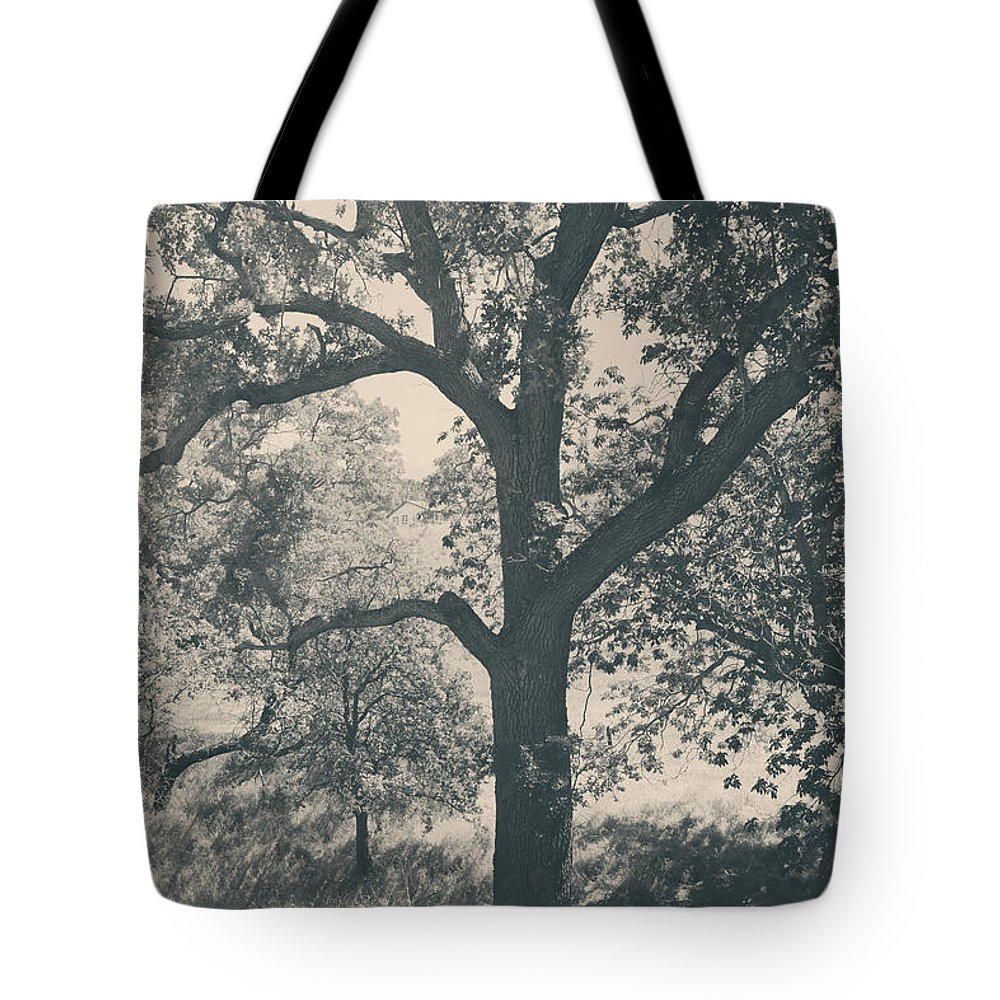 Mt. Diablo State Park Tote Bag featuring the photograph Just Hold On by Laurie Search