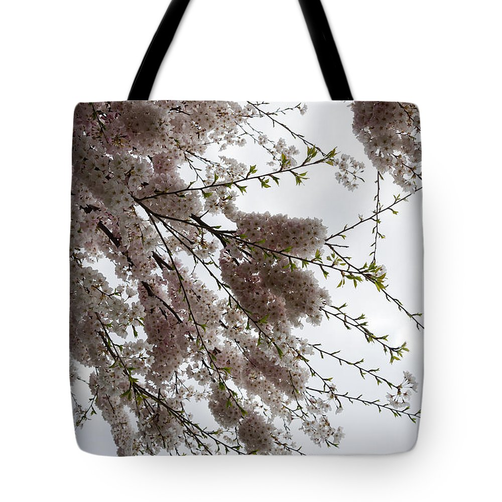 Just Lift Your Head Tote Bag featuring the photograph Just Lift Your Head And Enjoy Spring by Georgia Mizuleva