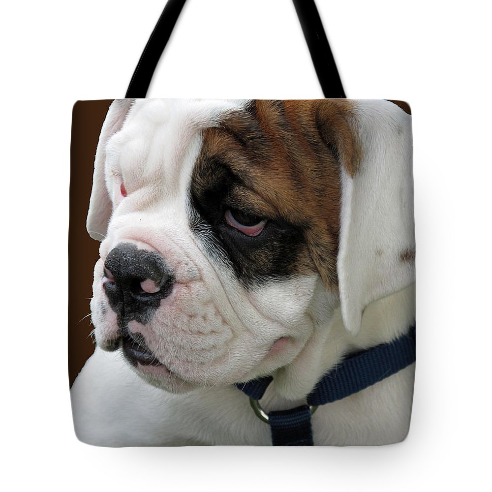 Pet Tote Bag featuring the photograph Just Too Cute by Barbara McDevitt