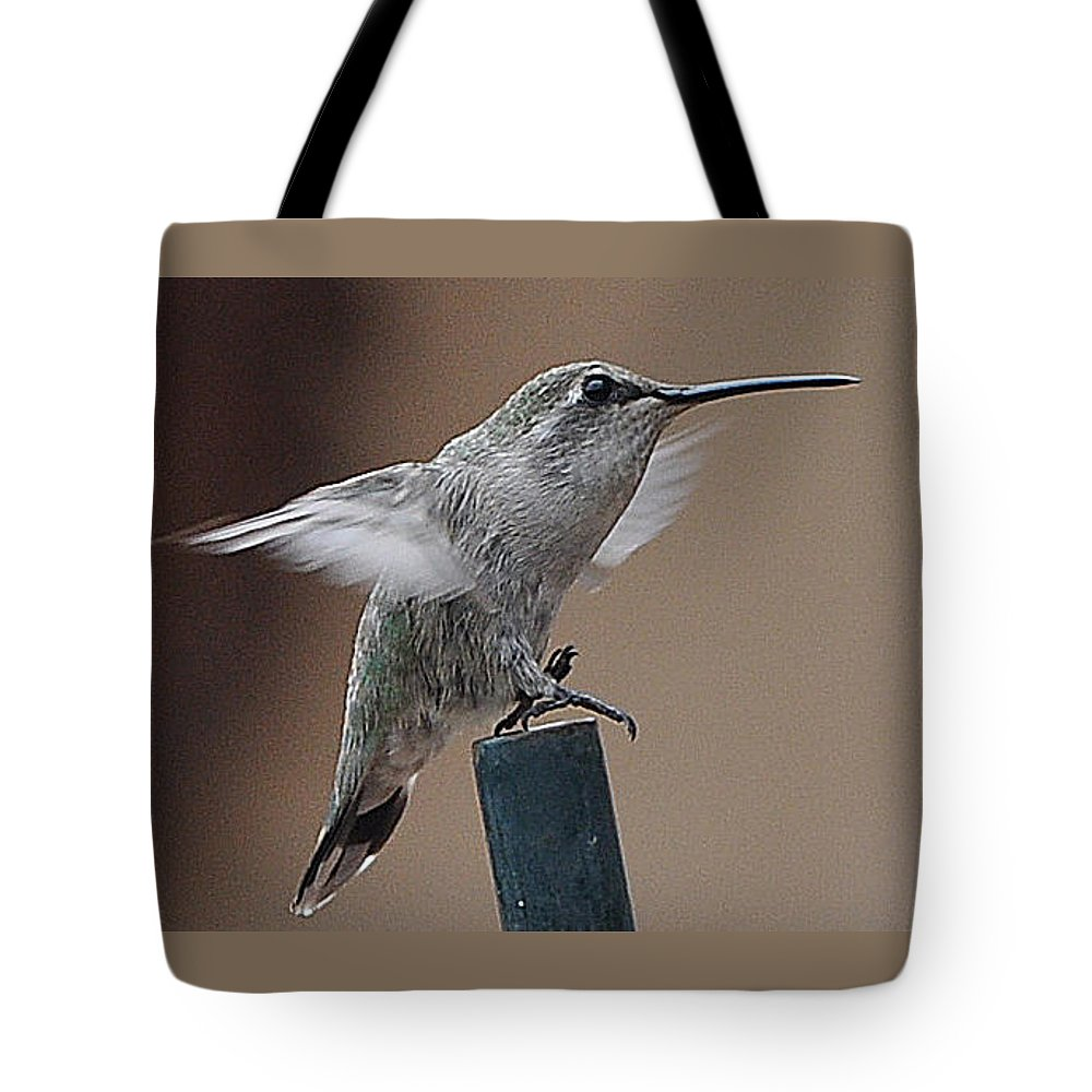 Animal Tote Bag featuring the photograph Juvenile Anna At Rest by Jay Milo