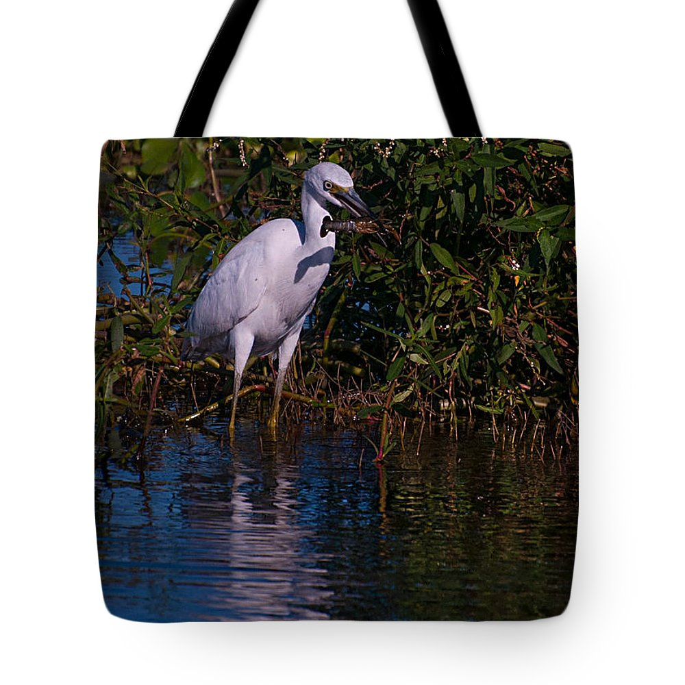 Juvenile Tote Bag featuring the photograph Juvenile Little Blue With Lobster 1 by Photos By Cassandra