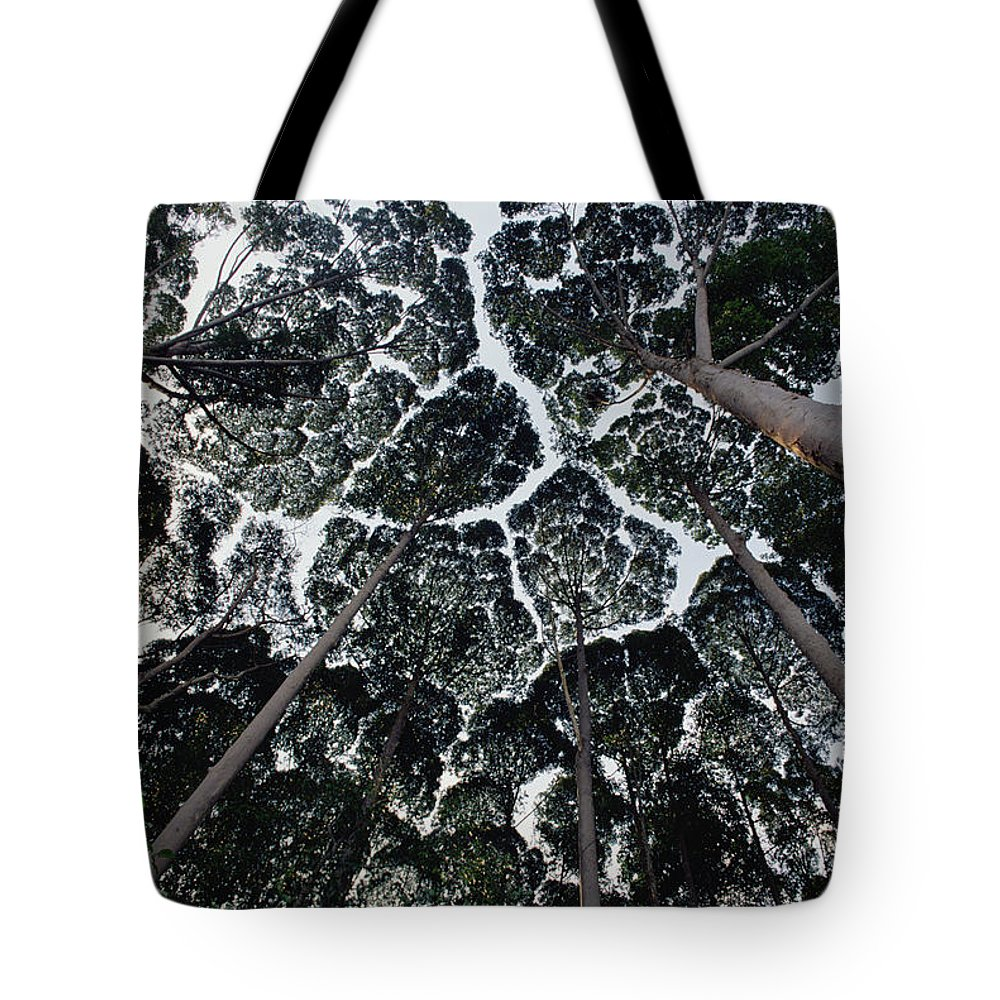Feb0514 Tote Bag featuring the photograph Kapur Trees Showing Crown Shyness by Mark Moffett