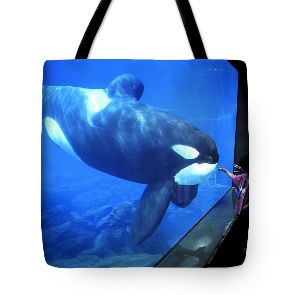 Keiko Tote Bag featuring the photograph Keiko The Killer Whale Oregon Coast Aquarium Pat Hathaway Photo 1996 by California Views Archives Mr Pat Hathaway Archives