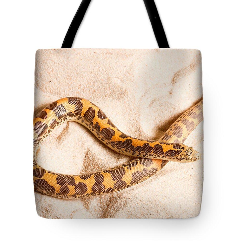 Animal Tote Bag featuring the photograph Kenyan Sand Boa Eryx Colubrinus by David Kenny
