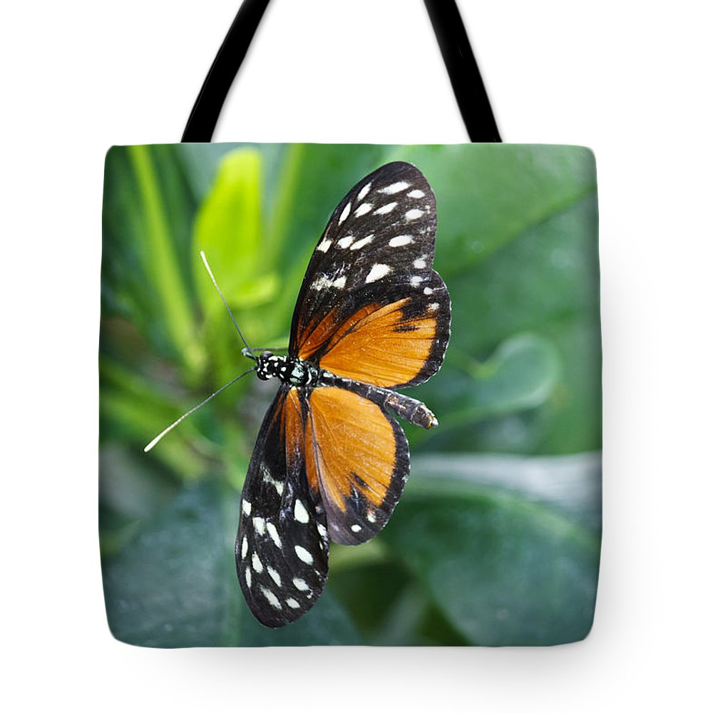 Florida Tote Bag featuring the photograph Key West Butterfly Conservatory - Monarch Danaus Plexippus 1 by Ronald Reid