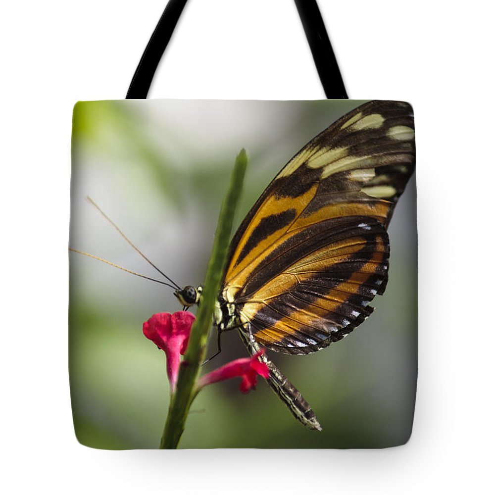 Florida Tote Bag featuring the photograph Key West Butterfly Conservatory - Papilio Zagreus by Ronald Reid