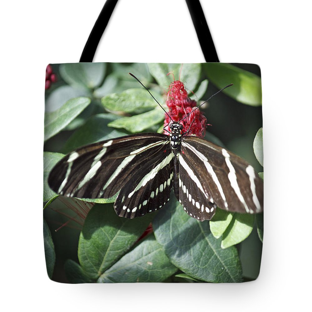 Florida Tote Bag featuring the photograph Key West Butterfly Conservatory - Zebra Heliconian by Ronald Reid