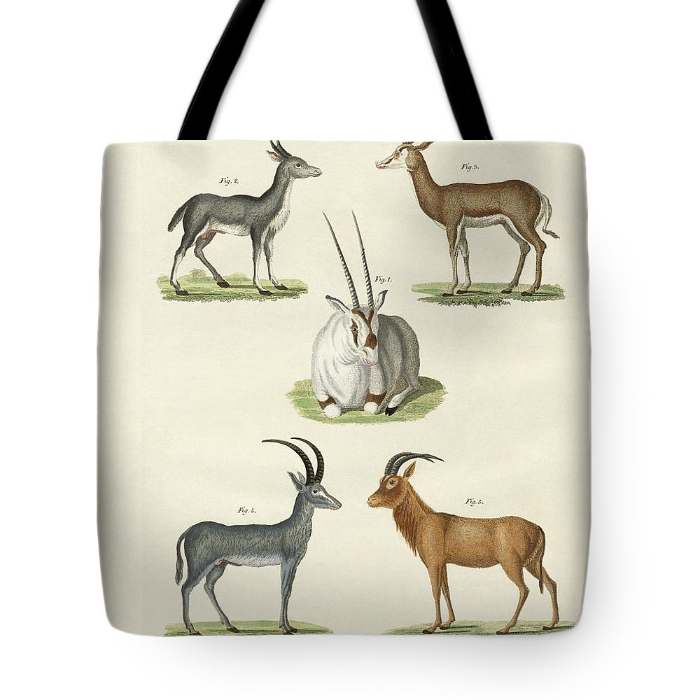 Bertuch Tote Bag featuring the drawing Kinds Of Antilopes by Splendid Art Prints