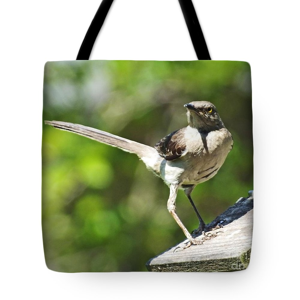 Mockingbird Tote Bag featuring the photograph King Of The Feeder by Lizi Beard-Ward