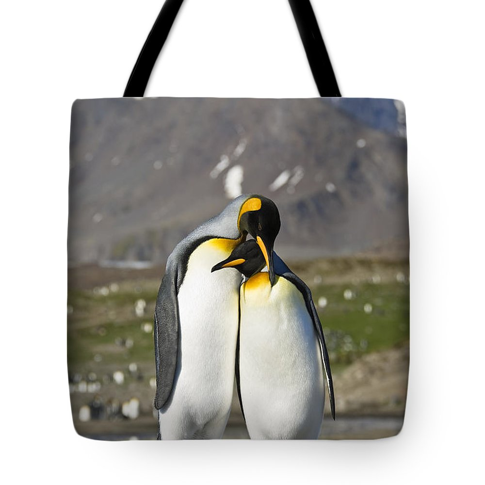 Feb0514 Tote Bag featuring the photograph King Penguins Courting St Andrews Bay by Konrad Wothe