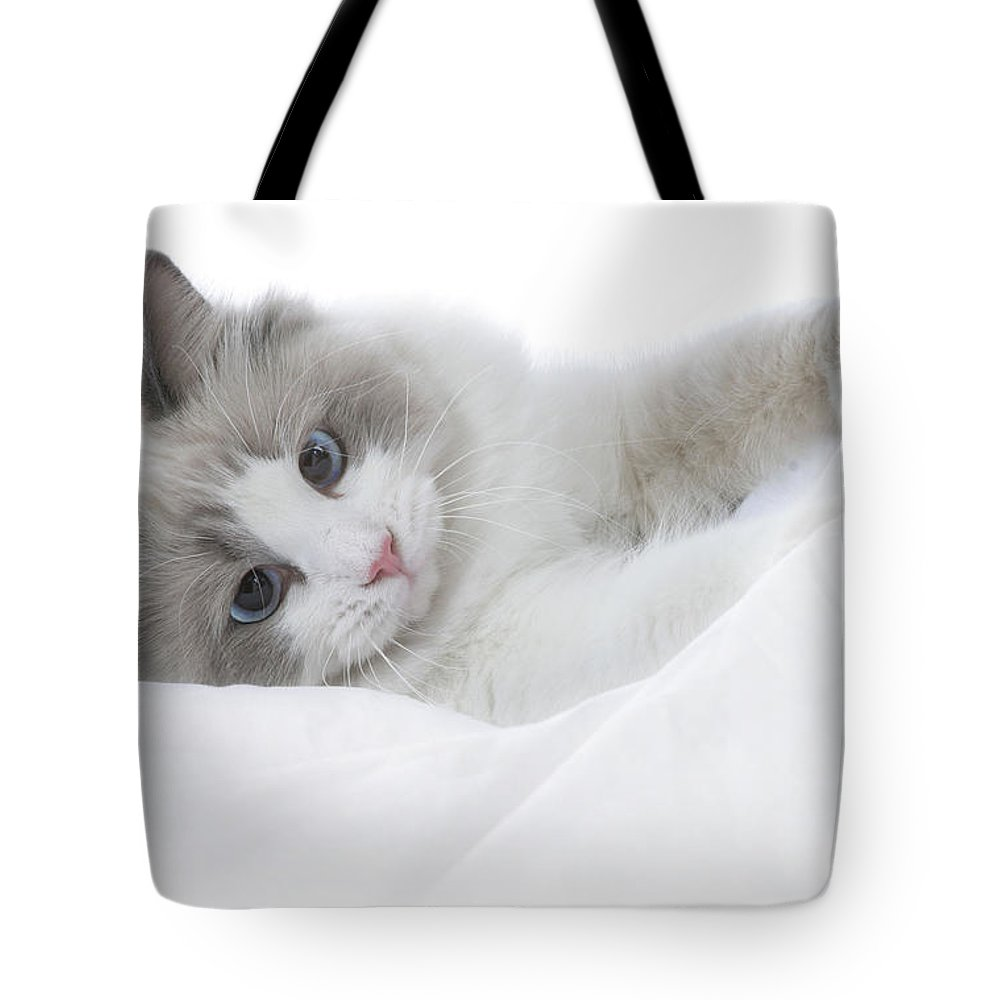 Cat Tote Bag featuring the photograph Kitten by David and Carol Kelly