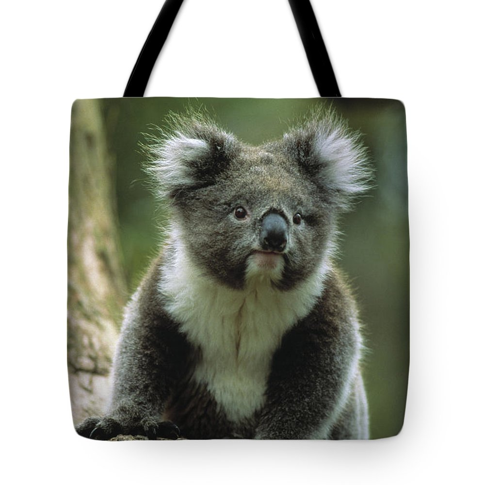 Photography Tote Bag featuring the photograph Koala On A Tree by Animal Images