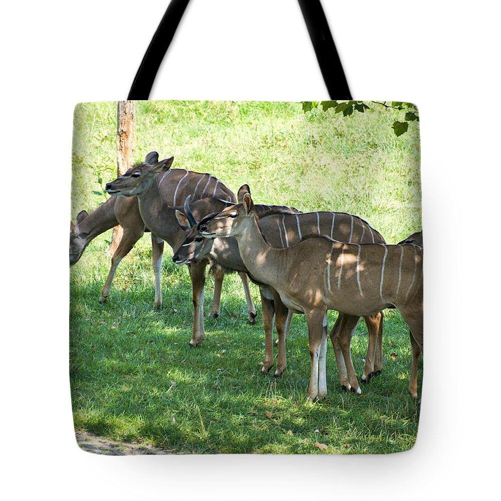 Antelope Tote Bag featuring the digital art Kudu Antelope In A Straight Line by Chris Flees