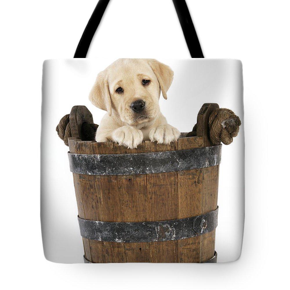 Labrador Retriever Tote Bag featuring the photograph Labrador Puppy In Bucket by John Daniels