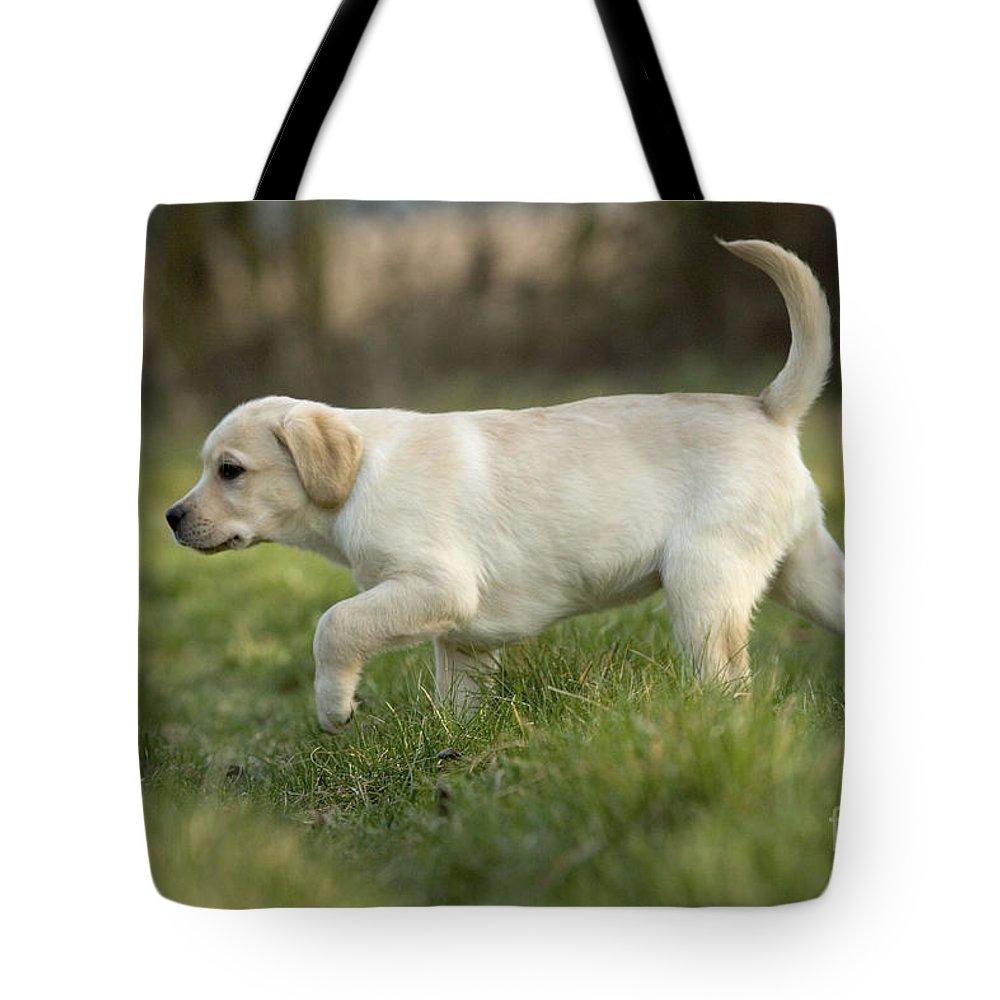 Labrador Retriever Tote Bag featuring the photograph Labrador Puppy by Jean-Michel Labat