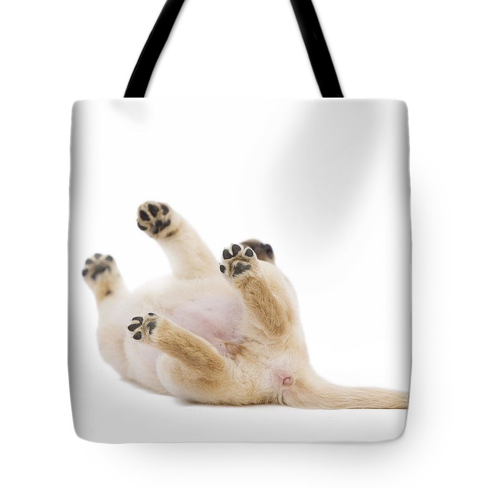 Labrador Retriever Tote Bag featuring the photograph Labrador Puppy Rolling Over by Jean-Michel Labat