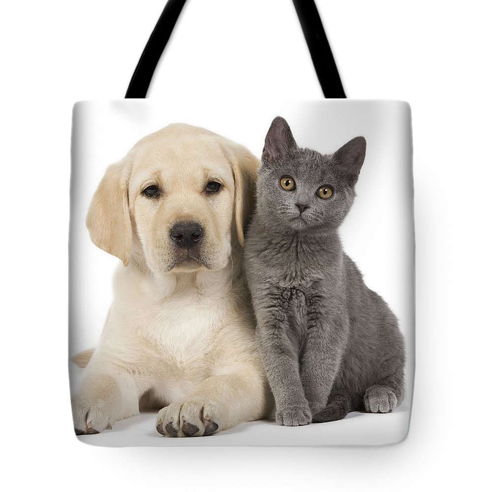 Labrador Retriever Tote Bag featuring the photograph Labrador Puppy With Chartreux Kitten by Jean-Michel Labat