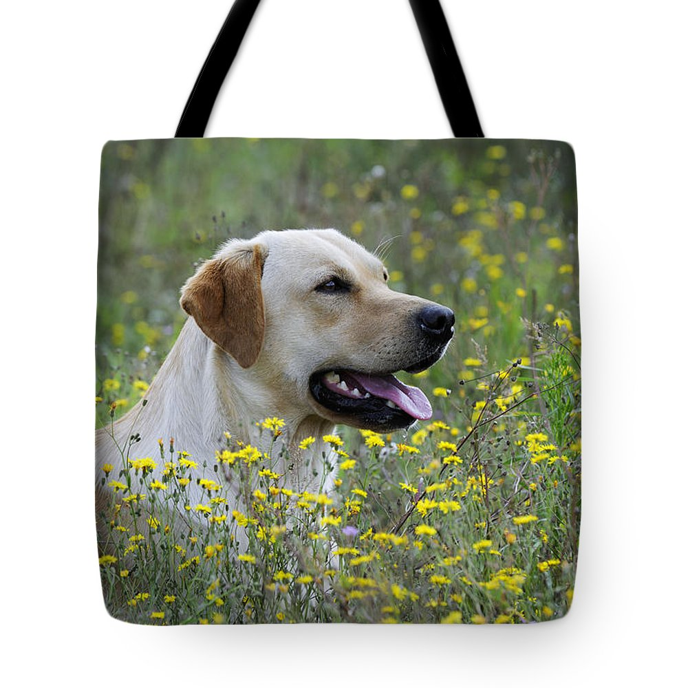 Labrador Retriever Tote Bag featuring the photograph Labrador Retriever Dog by John Daniels