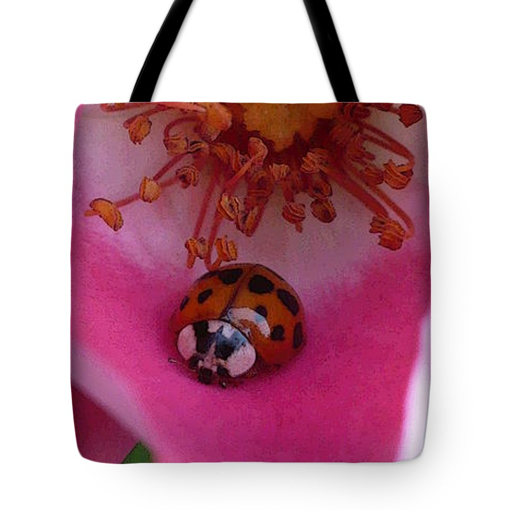 Pink Tote Bag featuring the photograph Ladies Rose by Nicki Bennett