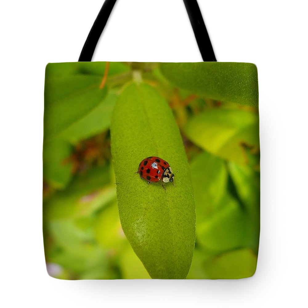 Lady Tote Bag featuring the photograph Lady Bug Leaf by Nicki Bennett