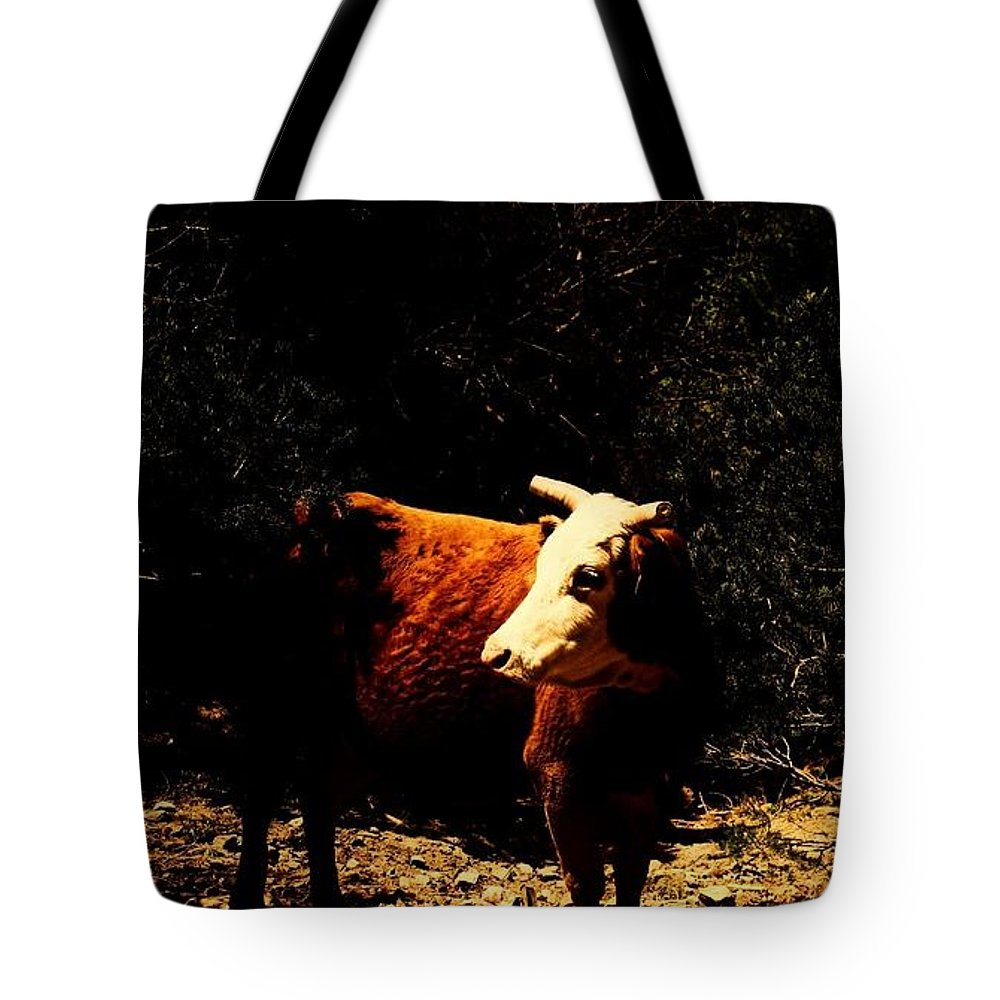 Cow Tote Bag featuring the photograph Lady Cow by Jessica Shelton