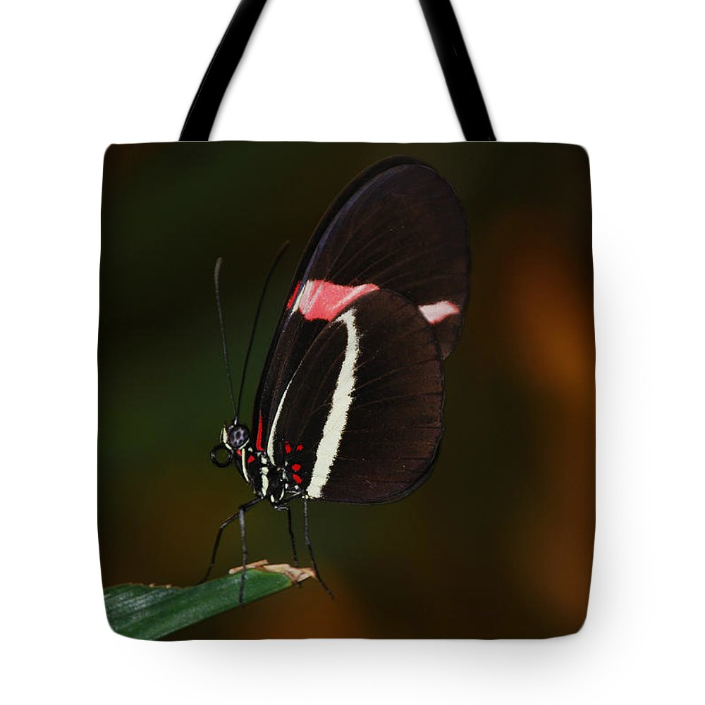 Star Eyes Tote Bag featuring the photograph Lady With Wings by Eric Liller