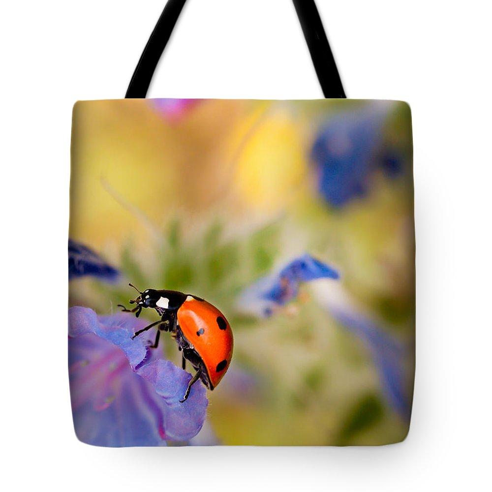 Ladybird Tote Bag featuring the photograph Ladybird by Meir Ezrachi
