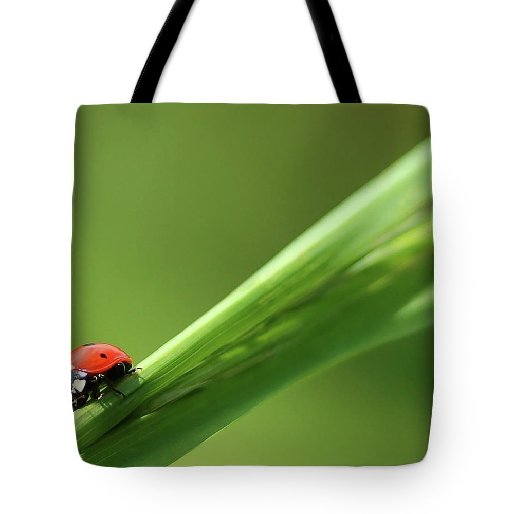 Ladybird Tote Bag featuring the photograph Ladybird On Green Leaf by Cliff Norton