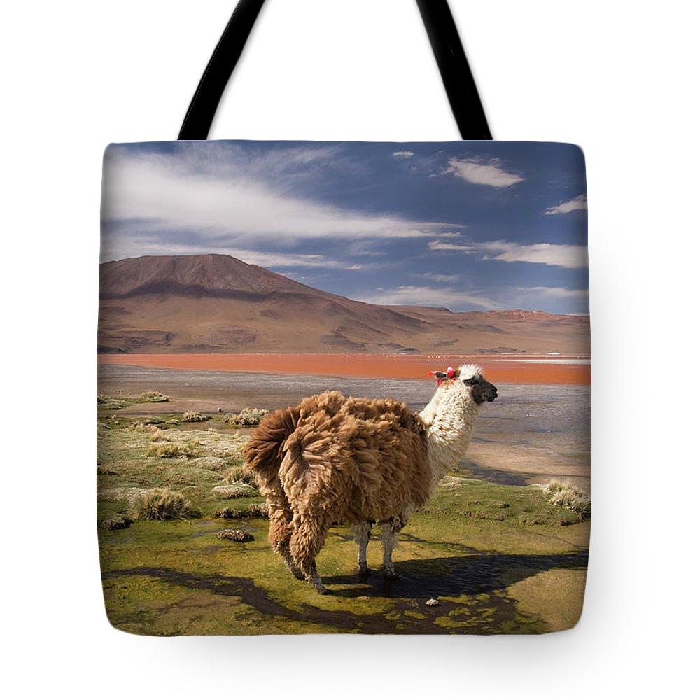 Scenics Tote Bag featuring the photograph Laguna Colorado Lake With Llama by John Elk