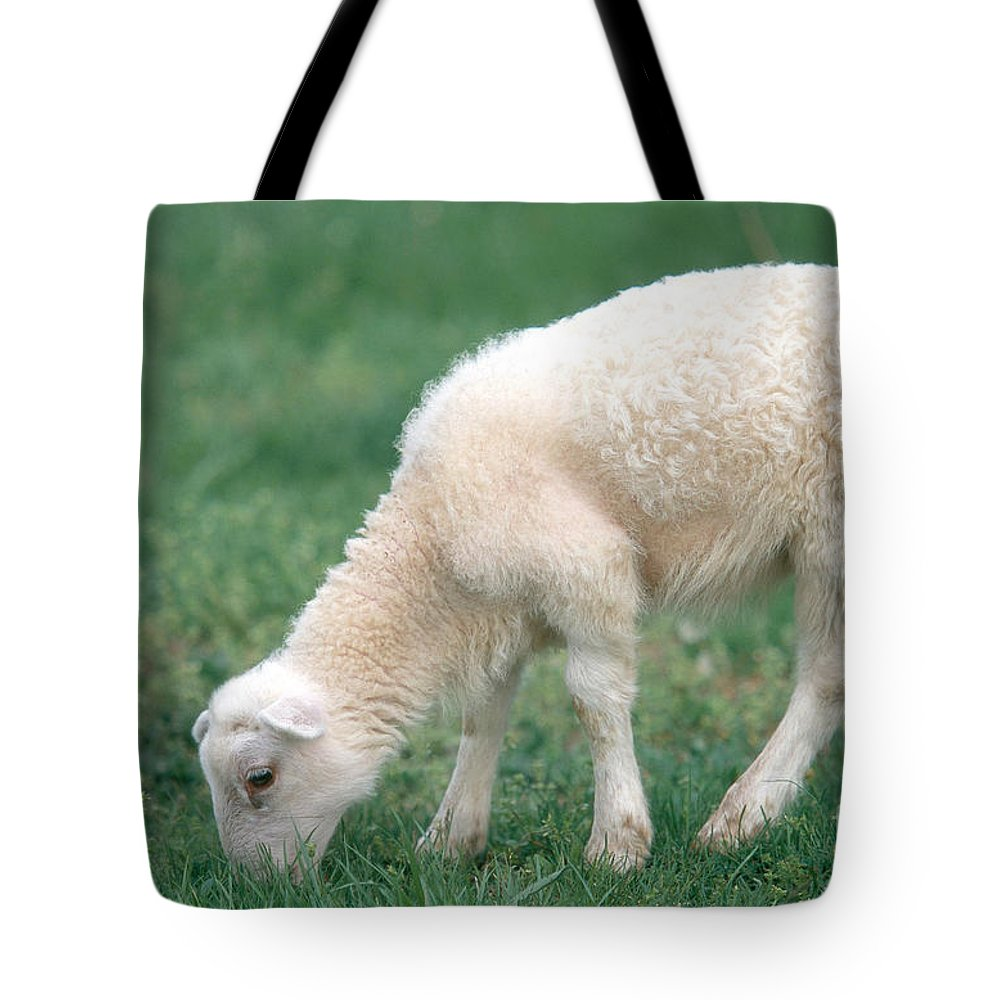Animal Tote Bag featuring the photograph Lamb by David Davis