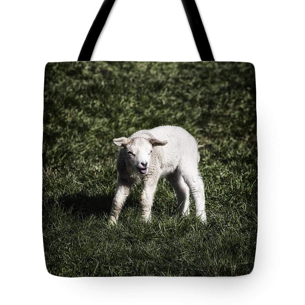 Animal Tote Bag featuring the photograph Lamb by Joana Kruse