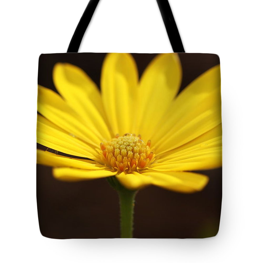 Kathy laberge flowers misc wall art tote bags izmirmasajfo Image collections