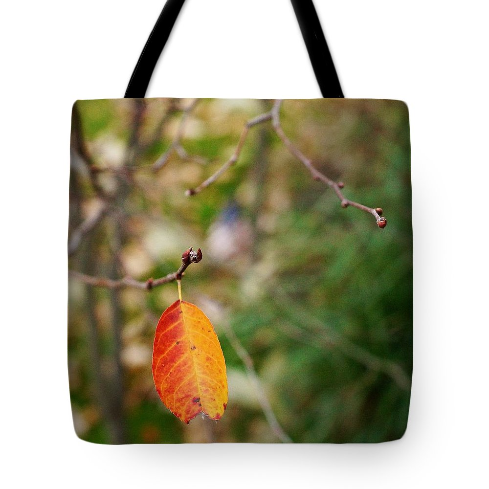Matt Matekovic Tote Bag featuring the photograph Last Leaf November by Photographic Arts And Design Studio