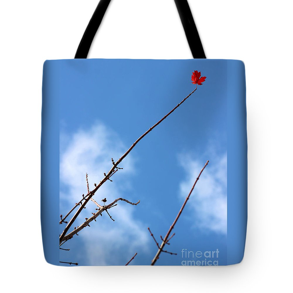 Leaf Tote Bag featuring the photograph Last Leaf Standing by Karen Adams