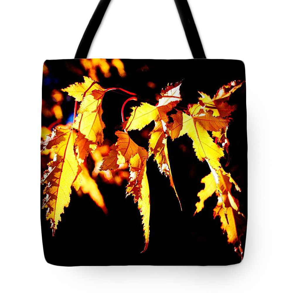 Tote Bag featuring the photograph Last Leaves Of Summer by David Matthews