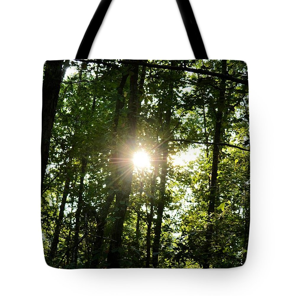 Last Light In The Forest Tote Bag featuring the photograph Last Light In The Forest by Maria Urso