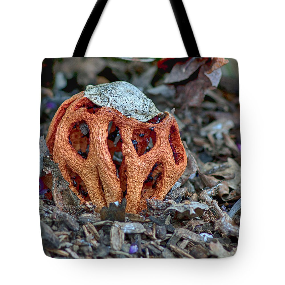 Latticed Stinkhorn Tote Bag featuring the photograph Latticed Stinkhorn by Betty Depee