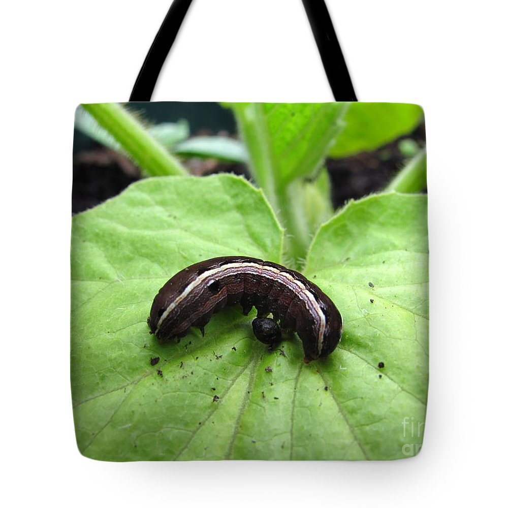 Lavender And Cream Caterpillar Prints Purple Caterpillar Prints Colorful Caterpillar Prints Bird Dropping Mimic Caterpillar Images Entomology Biodiversity Conservation Forest Ecology Intelligent Design Nature Critter Prints Insects Tote Bag featuring the photograph Lavender And Cream by Joshua Bales