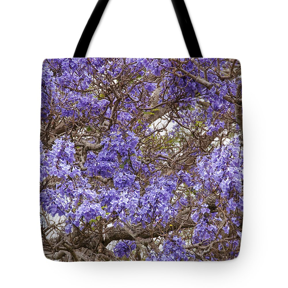 Lavender-colored Blossoms Jacaranda Mimosifolia Tree Haleakala Highway East Maui Hawaii Nature Bloom Blooms Blossom Blossoms Tote Bag featuring the photograph Lavender-colored Tree Blossoms by Bob Phillips