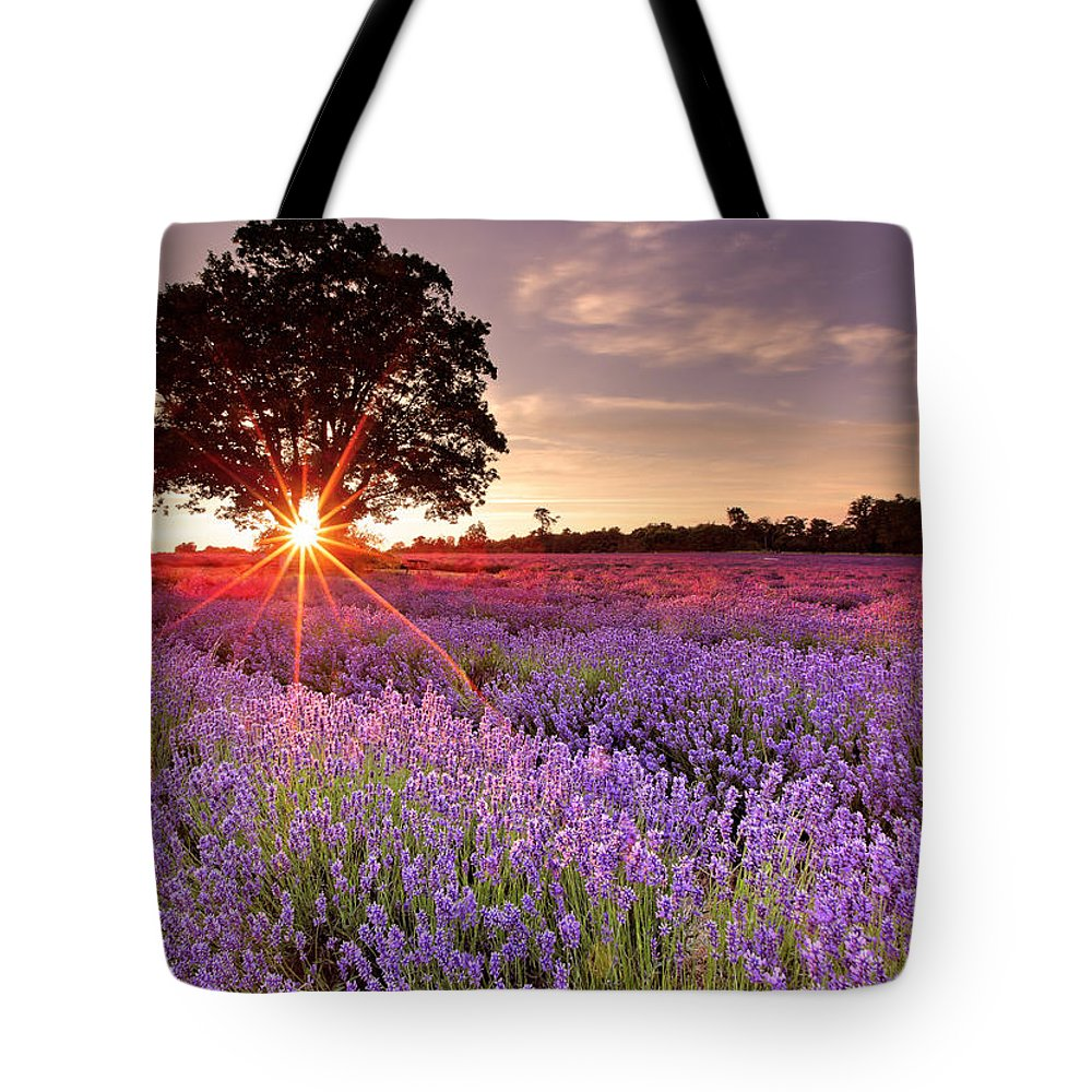 Scenics Tote Bag featuring the photograph Lavender Field by Sandra Kreuzinger