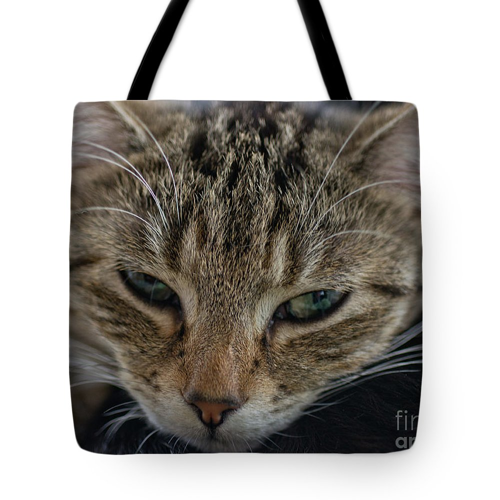 Kitten Tote Bag featuring the photograph Lazin' On A Rainy Afternoon by Brothers Beerens