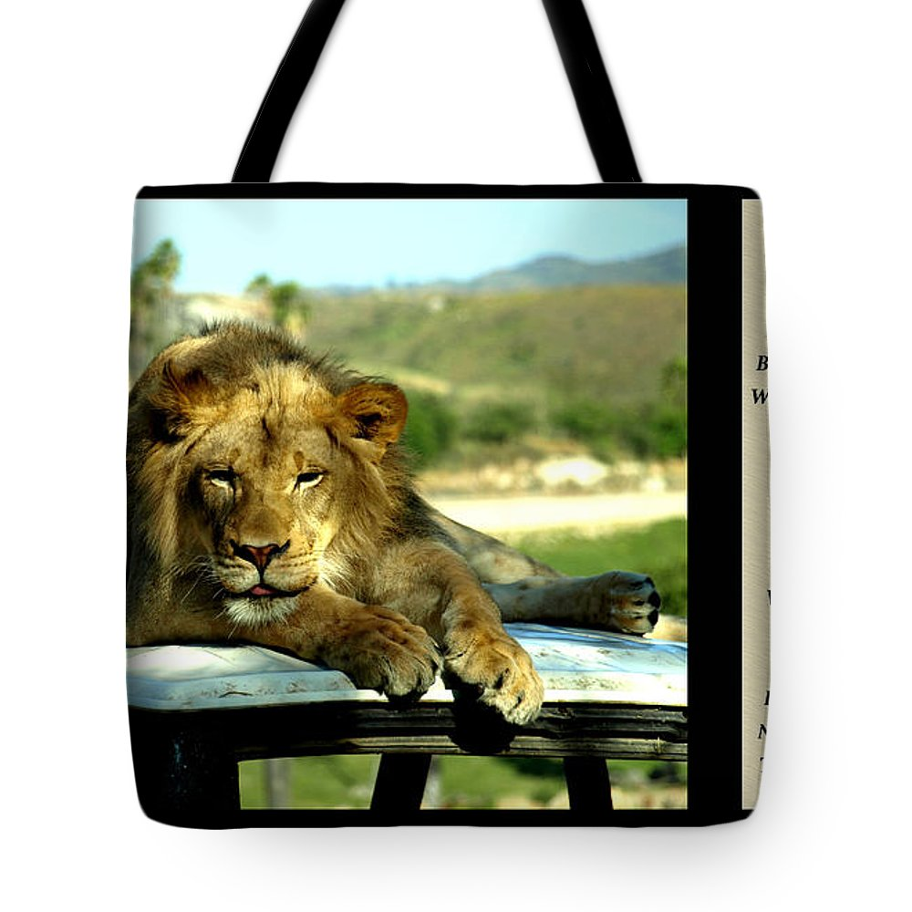 Poetry Tote Bag featuring the photograph Lazy Lion With Poety by Jessica Foster