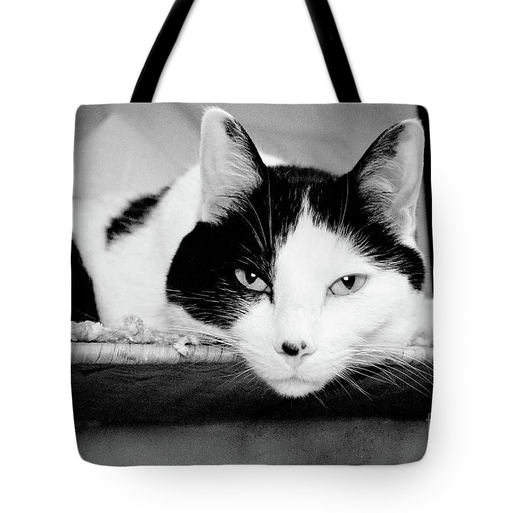 Andee Design Cat Tote Bag featuring the photograph Le Cat by Andee Design