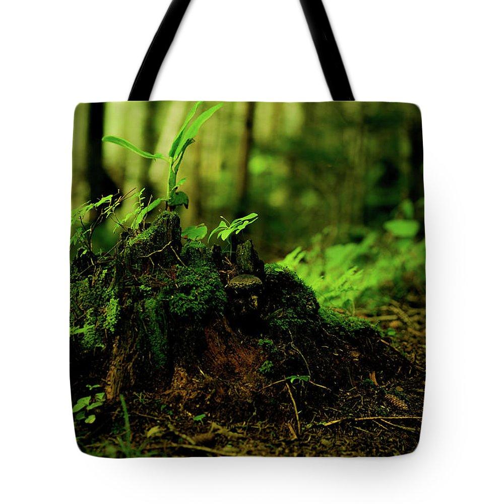 Hokkaido Tote Bag featuring the photograph Leaf Bud by Plasticboystudio