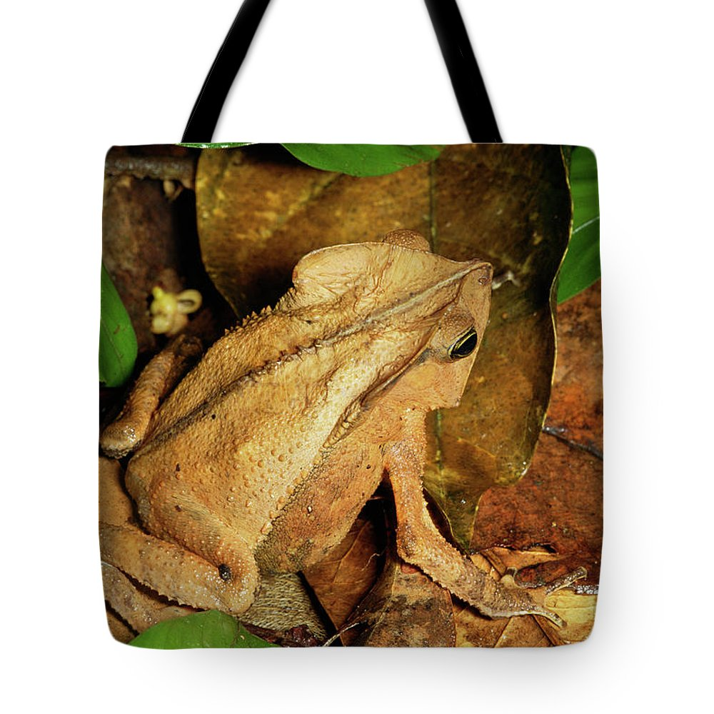 Brown Tote Bag featuring the photograph Leaf Litter Toad Bufo Typhonius by Michael and Patricia Fogden