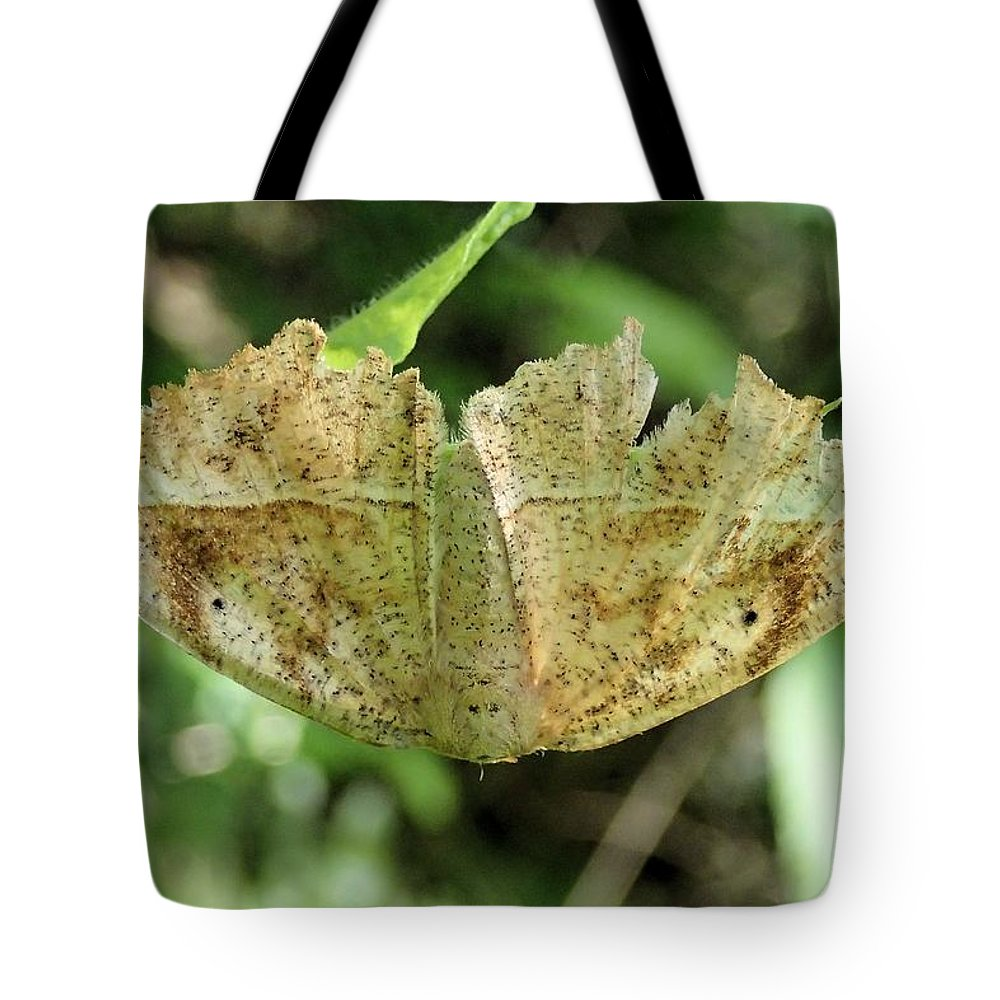 Curved-toothed Geometer Tote Bag featuring the photograph Leaf Mimicking Moth by Doris Potter