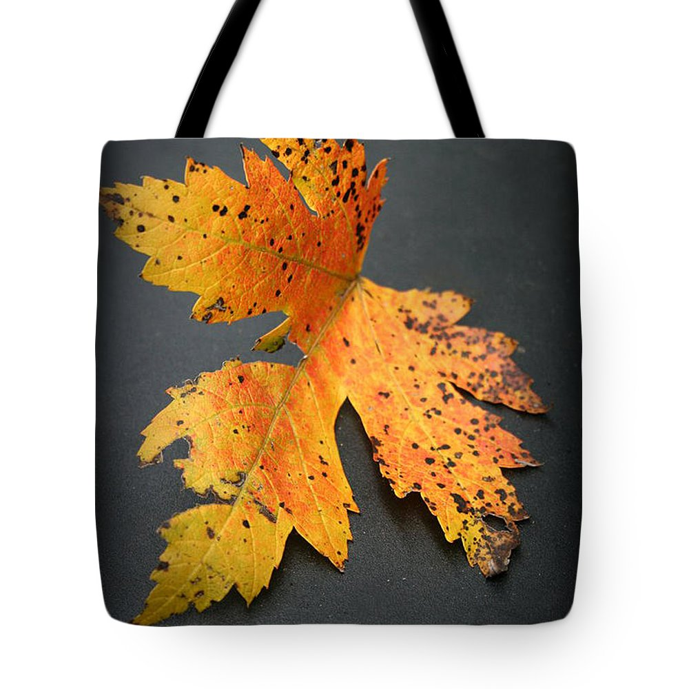Nature Tote Bag featuring the photograph Leaf Portrait by Linda Sannuti